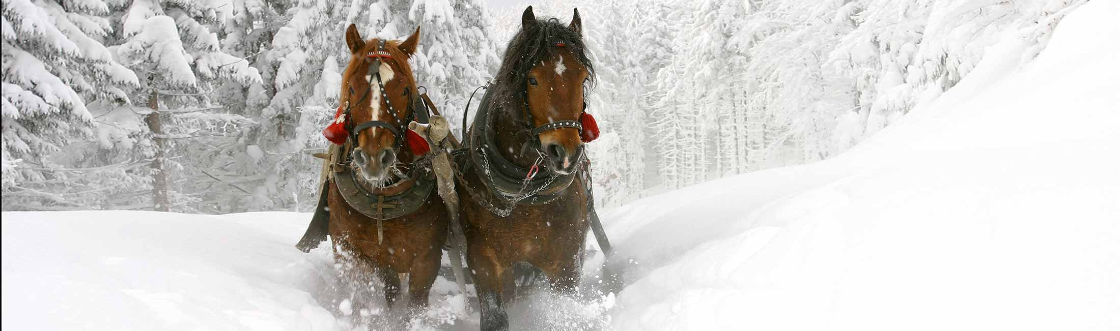 Take Time For a Sleigh Ride