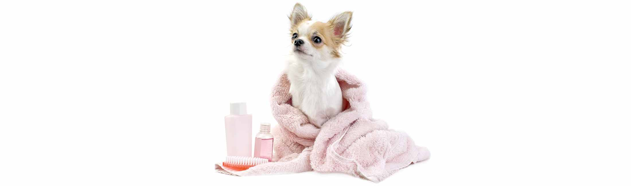 Have A Dog Spa Day