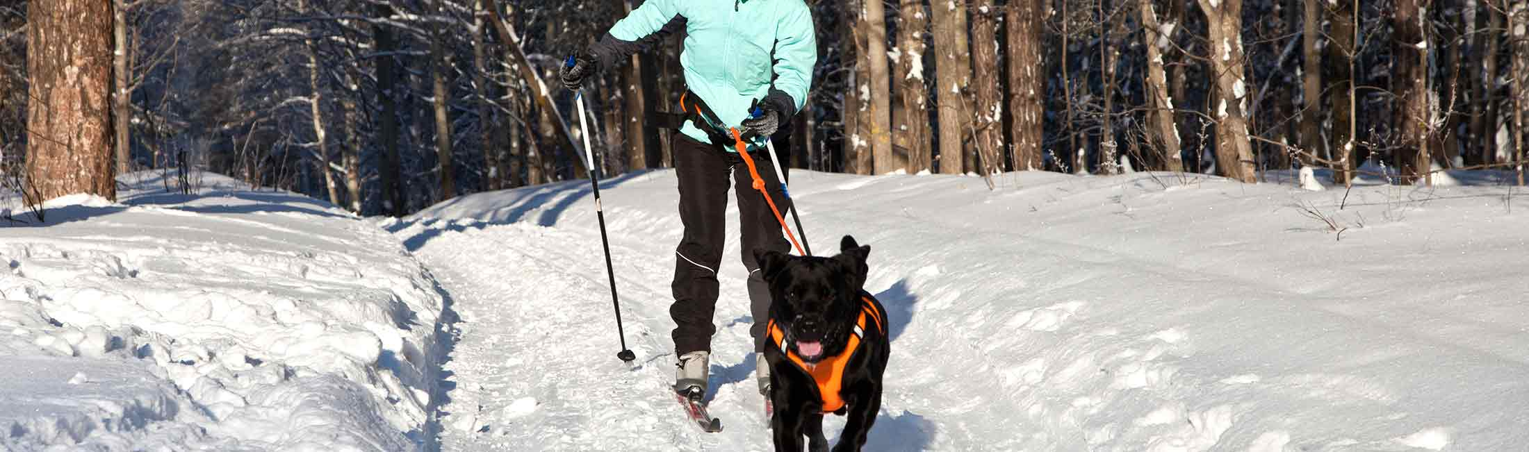 Try Out Skijoring